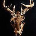 Deer Skull by Joy Bradley