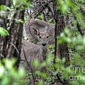 Deer Through The Trees by M Dale