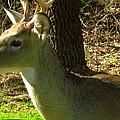 Deer4 2009 by Glenn Bautista