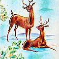 Deers Break by Munir Alawi