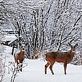 Deers In Winter by FL collection