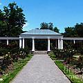 Delaware Park Rose Garden And Pergola Buffalo Ny Oil Painting Effect by Rose Santuci-Sofranko