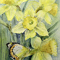 Delias Mysis Union Jack Butterfly On Daffodils by Karen Armitage