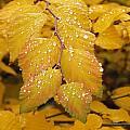 Delicate Droplets by Cynthia Singleton