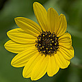 Delicate Flower by Kenneth Albin