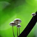 Delicate Mushrooms by Heather Fox