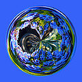 Delicate Orb by Brent Dolliver