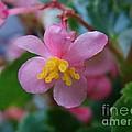 Delicate Petals by Michelle Regan