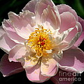 Delicate Touch  by Neal Eslinger