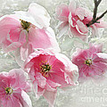Delicate Tree Peonies Branching Out by Barbara McMahon