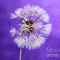 Delicate Wish by Krissy Katsimbras
