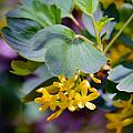 Delicate Yellow Flowers by Brent Dolliver