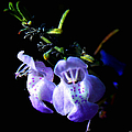 Delicately Purple by Debra Forand
