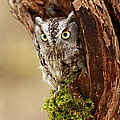 Delighted By The Eastern Screech Owl by Inspired Nature Photography Fine Art Photography