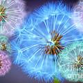 Delightful Dandelions by Donald Davis