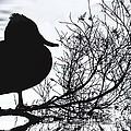 Delightful Duck by Kym Clarke