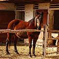 Delightful Horse by Marcia Lee Jones