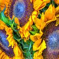 Delightfully Sunny by Heidi Smith