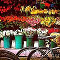 Delivery Bikes At Flower Market by Miriam Danar