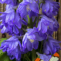 Delphinium And Butterfly by Garry Gay