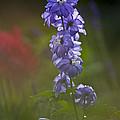 Delphinium Blossom by Heiko Koehrer-Wagner