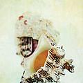 Delphinula Sea Shell by Stephanie Frey