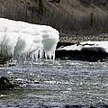 Denali Area Icicles  by Tara Lynn