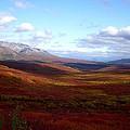 Denali In The Autumn by Terri Waselchuk