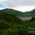 Denali National Park 2 by Jacqueline Athmann