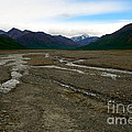 Denali National Park 3 by Jacqueline Athmann