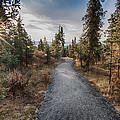 Denali Path by Lauri Novak