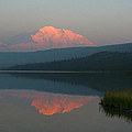 Denali Reflection by Michael Sims