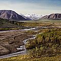 Denali Toklat River by Penny Lisowski