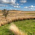 Denbigh Moors by Adrian Evans