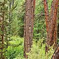 Dense Forest View by Jess Kraft