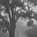 Dense Morning Fog In Oaks by Xyldia Grace