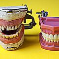 Dental Models by Garry Gay