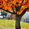 Denver Park 5 by Angelina Vick