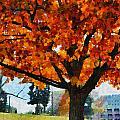 Denver Park 6 by Angelina Vick