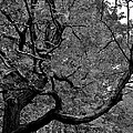 Denver Tree Fx by Joseph Yarbrough