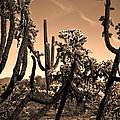 Desert At Dusk by Deb Halloran