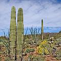 Desert Beauty by KandS PhotoArt