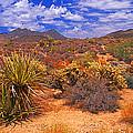 Desert Beauty by Rich Walter
