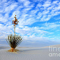 Desert Beauty White Sands New Mexico by Bob Christopher