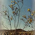 Desert Bloom by Linda Dunn