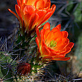Desert Color by K D Graves