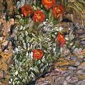 Desert Flowers by Mukta Gupta