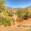Desert Hardscape by Deborah Smolinske