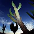 Desert Landscape by Richard Hallman