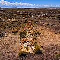 Desert Log by Angus Hooper Iii